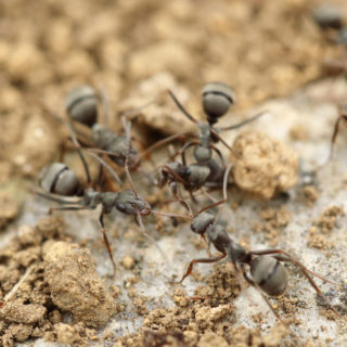 Working like an ant – idioms