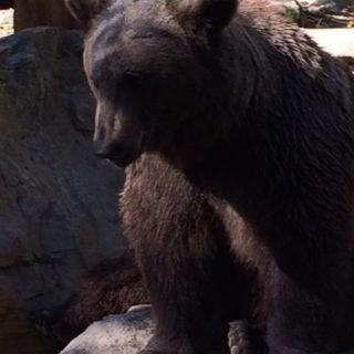 The Pyrenean Wildlife Park – Parc Animalier des Pyrénées