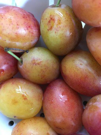 Victoria plums